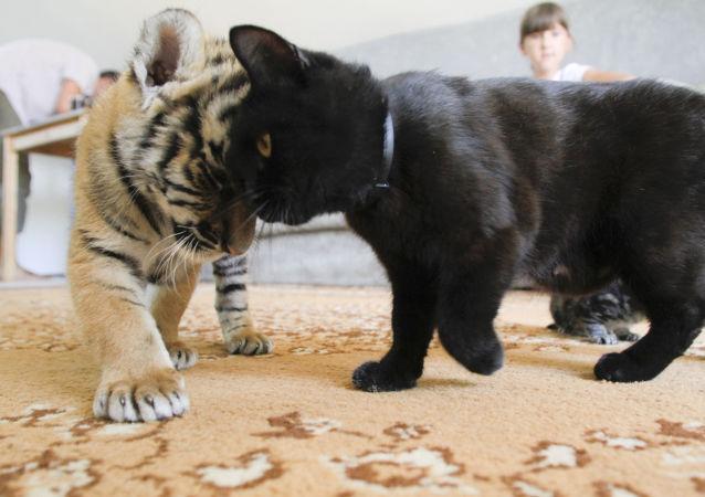 حیوانات در باغهای وحش امریکا واکسین میشوند