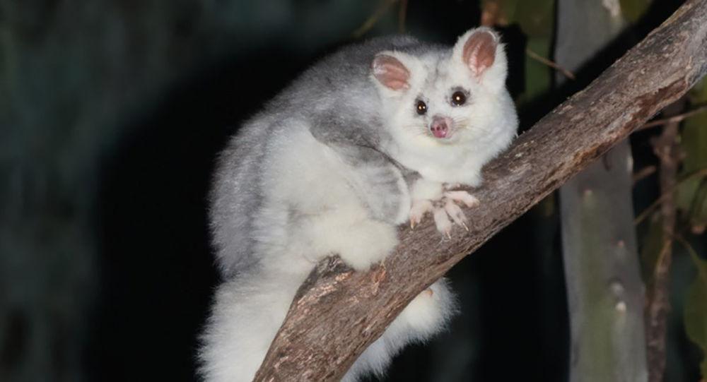 دو گونه جدید پستانداران در استرالیا شناسایی شد