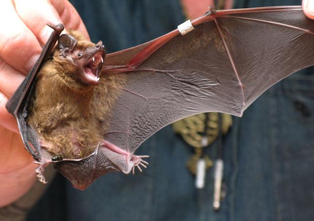 افشای قصد دانشمندان ووهان برای آلوده ساختن خفاش به ویروس کرونا در سال 2018