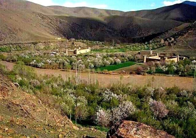 فرمانده امنیه طالبان برای دایکندی: طالب یا غیر طالب، هرکس به تلاشی خانه مردم رفت، بکُشند