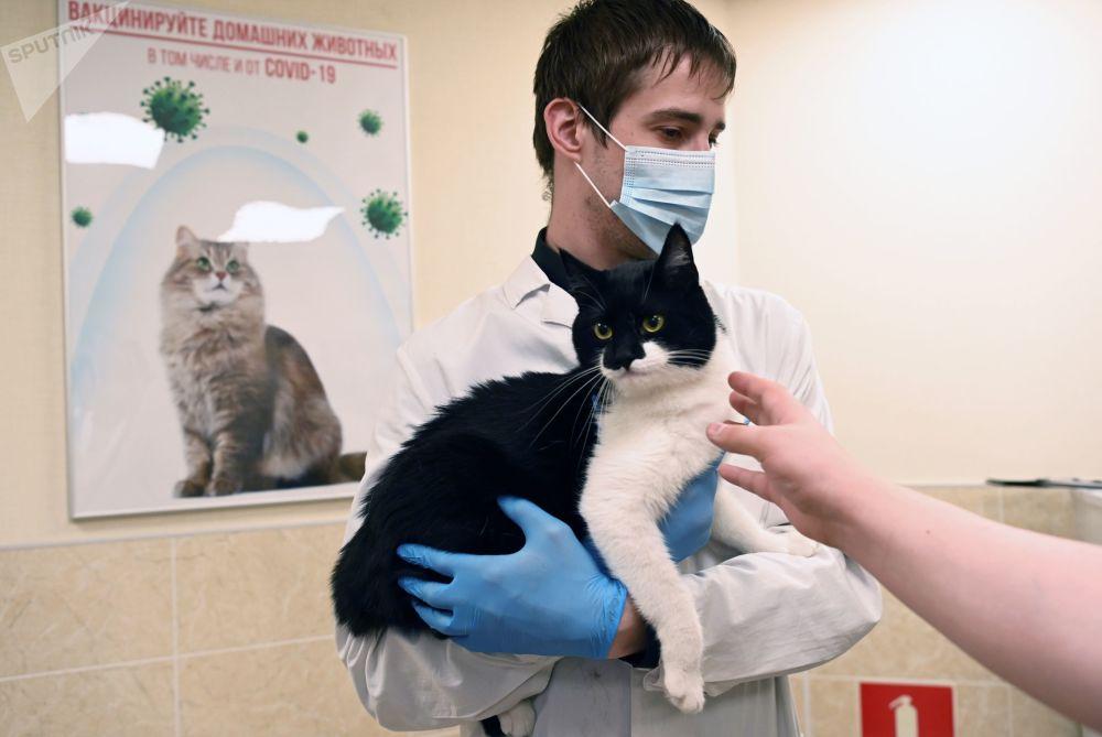 واکسیناسیون کرونایی حیوانات خانگی در مسکو