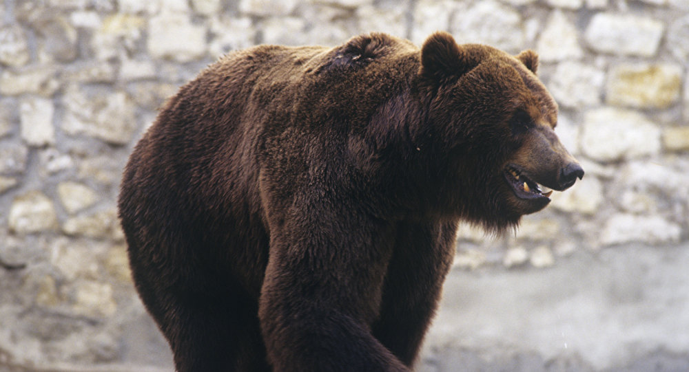 حمله یک خانم به یک خرس+ویدیو