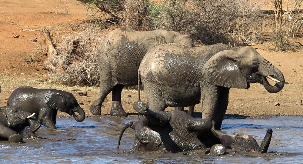 فرار گله فیلها از پارک ملی چین؛ بیش از یک میلیون دالر به مردم خسارت زده است
