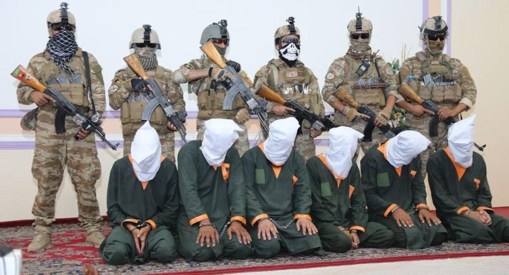 ریاست امنیت ملی هرات یک گروه تروریستی را بازداشت کرد