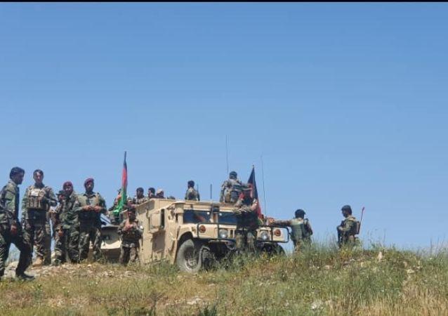 ۴۳ جنگجوی طالبان در پکتیکا کشته شدند