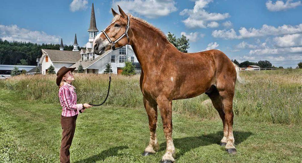 قد بلند ترین اسب جهان در آمریکا از دنیا رفت