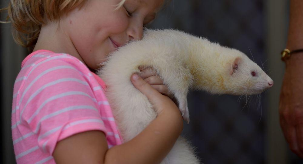 ثبت نخستین مورد کرونا در یک حیوان خانگی در آمریکا