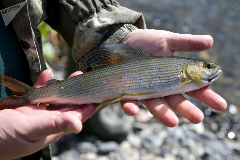 ماهیگیری در سیبریا.