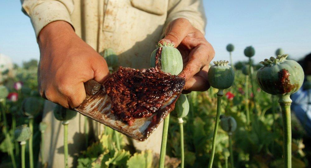 نقش امریکا در تولید مواد مخدر در افغانستان