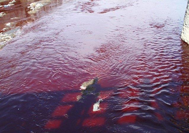 رنگ آب دریای کابل خونآلود شد