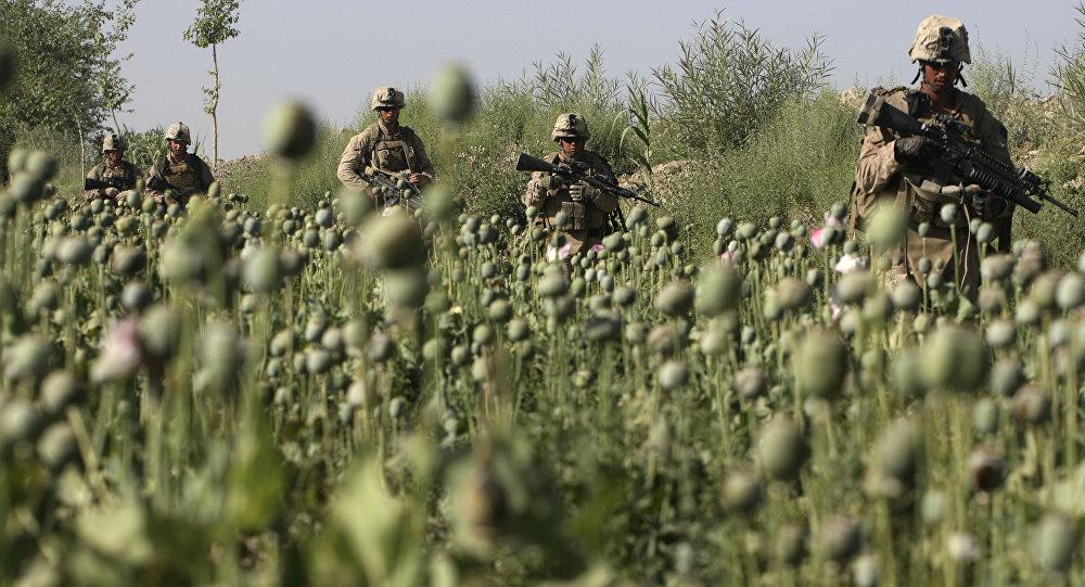 ترافیک مواد مخدر افغانستان به کجا منتهی میشود؟