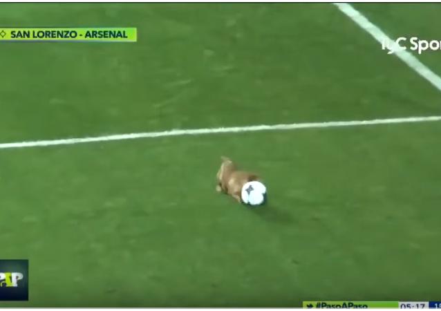 سگ فوتبالیست + ویدیو