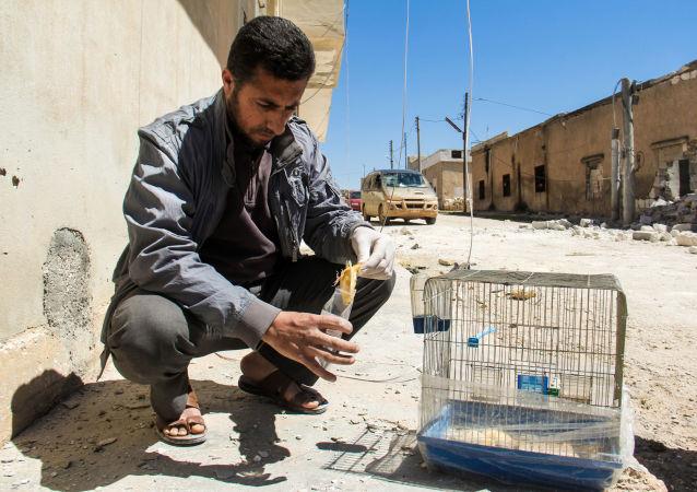 تلاش ناکام تروریستها برای حمله شیمیایی در ادلب