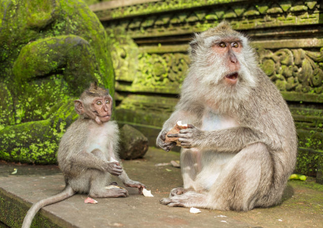 ثبت اولین قربانی ویروس میمون در چین
