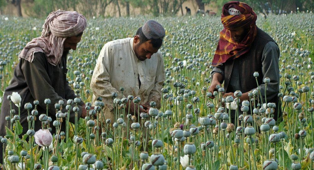 سیگار: طالبان سالانه بیش از 400 میلیون دالر از تجارت موادمخدر درآمد دارند