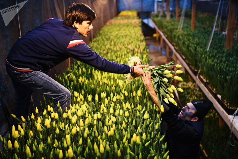 گل فروشان در آستانه ۸ مارچ، روز جهانی زن