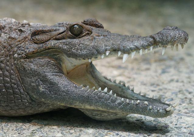 کشف یک موجود مانند تمساح + عکس
