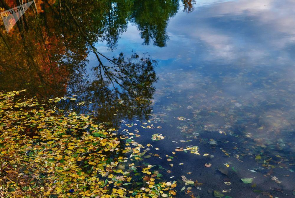 طبیعت زیبای شهر سن پترزبورگ در فصل خزان