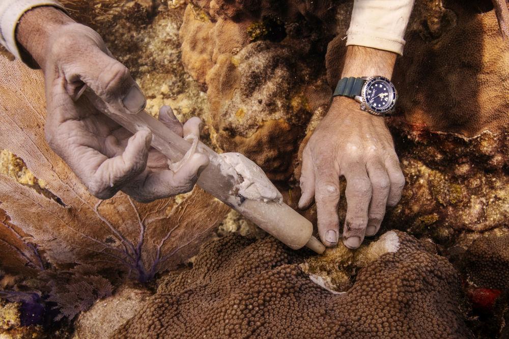 عملیات نجات مرجان های دریایی در جزایر کارائیب