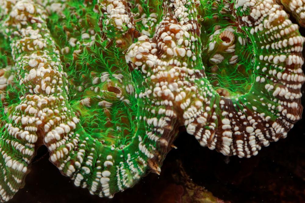 مرجان های دریایی در جزایر کارائیب