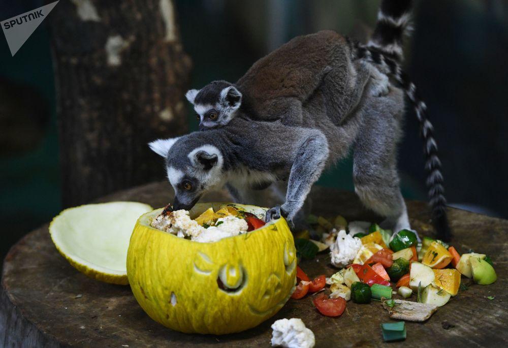 جشن کدو در باغوحش نووسیبیرسک.