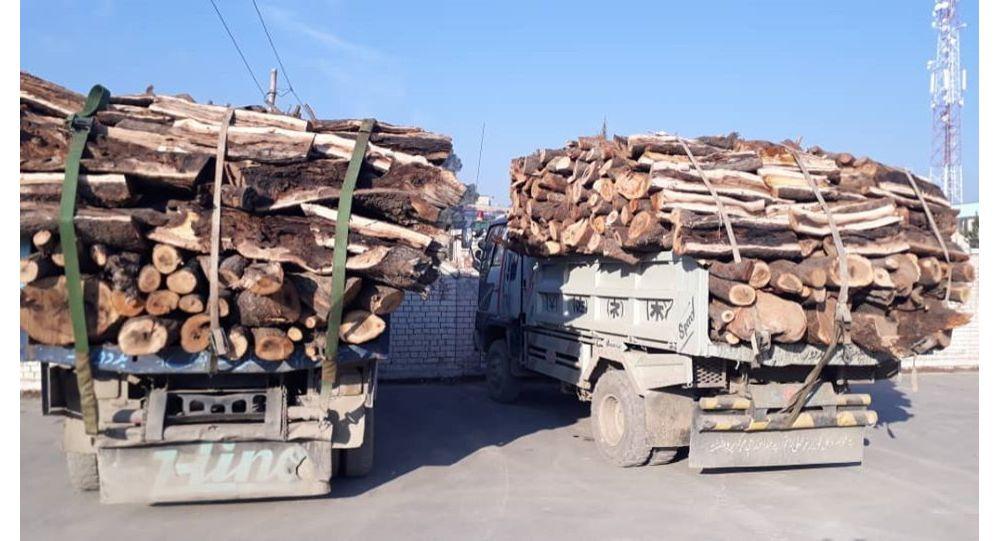قطع جنگلها در افغانستان ممنوع اعلام شد