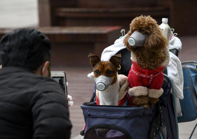 نخستین مورد انتقال ویروس کرونا از انسان به حیوان در هنگ کنگ تایید شد