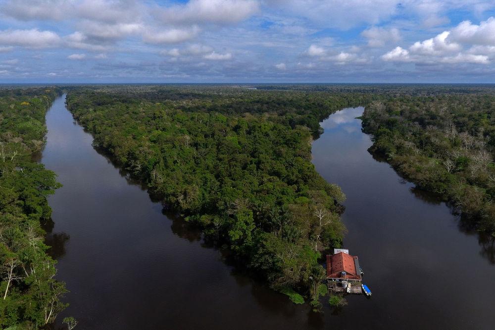 دریا آمازون