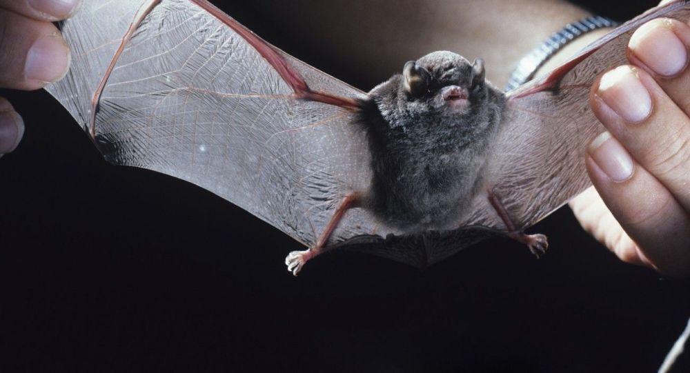 فاش شدن نقش چین روی مطالعه خفاش ها در زمینه کرونا