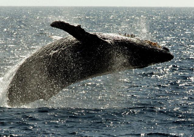 ماجرای مردی که از کام نهنگ زنده بیرون آمد