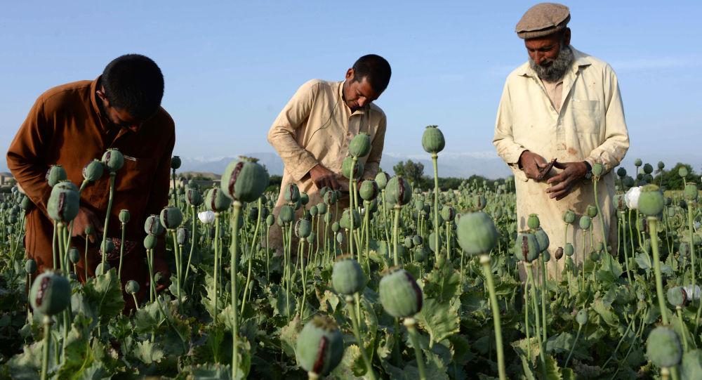 رسانه: قاچاق مواد مخدر از افغانستان به هند افزایش یافته است